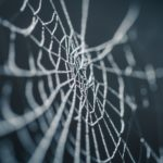 Spider web Dutch personal income tax legislation may be similar